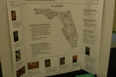 E-1st-Place-Educational-Native-Orchids-in-Florida-Parks-Wendy-Mazuk