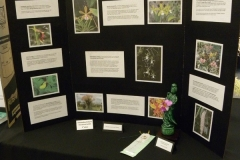E-3rd-Place-Educational-Orchids-in-National-Parks-Eunice-Walker
