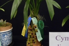 Best-Cymbidium-Flower-Ritchie-Jasmine-Cym.-Genos-Gem-Emerald-Fire