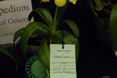 Best-Cypr.-Flower-Single-Flower-Kathryn-Romine-Paph.-King-of-Sweden