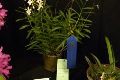 Best-Mini-Cattleya-Hybrid-Flower-wo-B-E-or-Epi-Rae-Jean-Walker