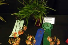 Best-Tolumnia-Flower-Barbara-Crist-Tolm.-Jairak-Firm