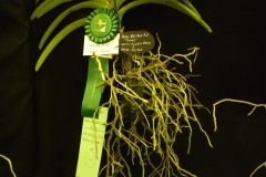 Best-Vanda-Hybrid-Flower-Less-Than-3-Inch-Barbara-Crist-
