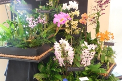 Commercial-Table-Top-1st-Place-Gross-Orchids-Flower-Power-2