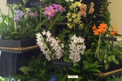 Commercial-Table-Top-1st-Place-Gross-Orchids-Flower-Power