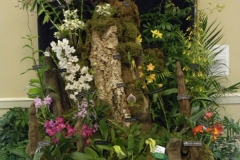 Commercial-Table-Top-2nd-Place-Accent-Orchids-Accents-Love-of-Orchids-Most-Artistic-CT