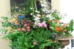 Commercial-Table-Top-3rd-Place-Suncoast-Orchids-Peace-Love-Orchids-2