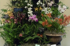 Commercial-Table-Top-3rd-Place-Suncoast-Orchids-Peace-Love-Orchids