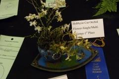 Cut-Flower-Multi-Genera-1st-Place-Tricia-Rose-Serenity