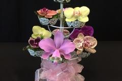 Cut-Flower-Multi-Genera-Blue-Birds-Nest-of-Orchid-Christine-ODonnell