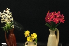 Cut-Flower-Multi-Genera-Trilogy-Tranquility-Barbara-Crist