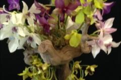 Cut-Flower-Multi-Genera-Unicorn-Barbara-Crist