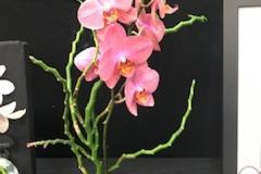 Cut-Flower-Multi-from-Single-plant-Feeling-Groovy-Ann-Marie-Fox