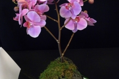 Cut-Flower-Multi-from-a-Single-Plant-2nd-Place-Davi-Custer-Orchids-Rock
