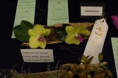 Cut-Flower-Multi-from-a-Single-Plant-3rd-Place-Bill-Gorski-Jr-Pieces-Love-Orchids