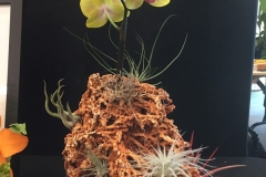 Cut-Flower-Multi-from-a-Single-Plant-Dave-Custer-Living-Reef