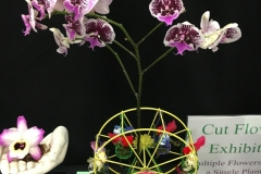 Cut-Flower-Multi-from-a-Single-Plant-Love-Birds-1st-Kiss-on-the-Orchid-Ferris-Wheel-Christine-ODonnell