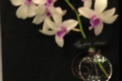 Cut-Flower-Multi-from-a-Single-Plant-Purple-Haze-Barbara-Crist