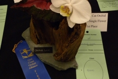 Cut-Flower-Single-1st-Place-Wendy-Mazuk-Orchid-Love