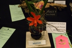 Cut-Flower-Single-4th-Place-Tricia-Rose-Solitude