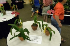 Plant-Tables-AOS-Only-Plant-Ralph-Brand-Plants