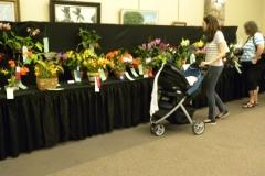 Plant-Tables-Cattleya