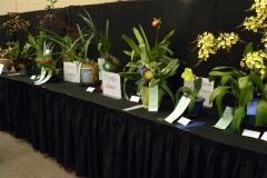 Plant-Tables-Cymbidium-Cypr.-Other-Genera