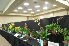Plant-Tables-Oncidium-2