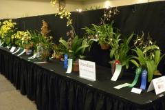 Plant-Tables-Oncidium