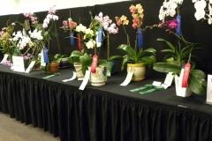 Plant-Tables-Phalaenopsis
