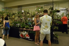 Vendor-booth-3-Accent-Orchids