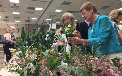 January Orchid Sale